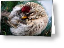 Ball Of Feathers Greeting Card by Christina Rollo