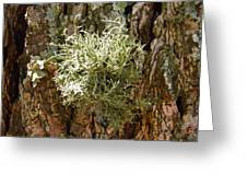 Ball Of Moss Greeting Card