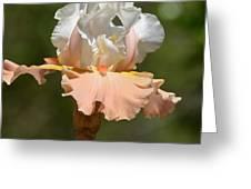 Ballerina Iris Greeting Card
