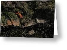 Ballestas Orange Crab 1 Greeting Card