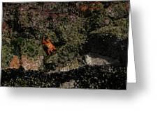 Ballestas Orange Crab 2 Greeting Card