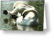 Ballet Of Swans  Greeting Card