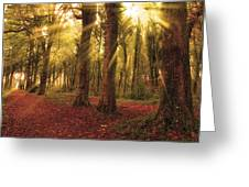 Ballyannan Wood Greeting Card