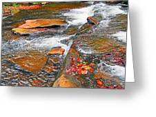 Balsam River Rocks And Leaves Greeting Card