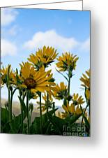 Balsamroot Reaching For The Sky Greeting Card by Cari Gesch