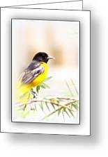 Baltimore Oriole 4348-10 Greeting Card