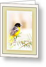 Baltimore Oriole 4348-11 - Bird Greeting Card