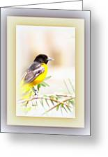 Baltimore Oriole 4348-12 Greeting Card