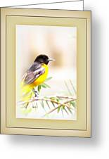 Baltimore Oriole - 4348-14 Greeting Card