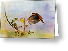 Baltimore Oriole Arrival  Greeting Card
