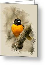 Baltimore Oriole Watercolor Art Greeting Card