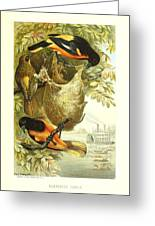 Baltimore Orioles Greeting Card by Philip Ralley
