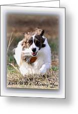 Bama - Pets - Dogs Greeting Card