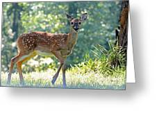 Bambi 2 Greeting Card