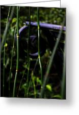 Bamboo And A Bench Greeting Card by Tara Miller