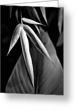 Bamboo And Banana Leaves Black And White Greeting Card
