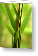Bamboo Branches Emerge Greeting Card