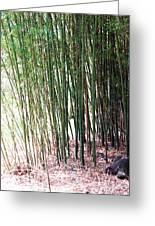 Bamboo By Roadsides Cherry Hill Roadside Greens            Greeting Card
