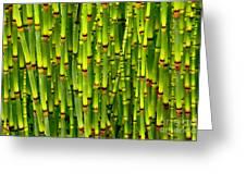 Bamboo Curtain Greeting Card