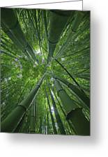 Bamboo Forest 1 Greeting Card
