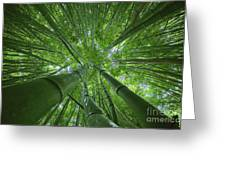 Bamboo Forest 2 Greeting Card
