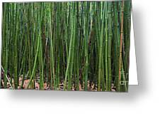 Bamboo Forest 3 Greeting Card