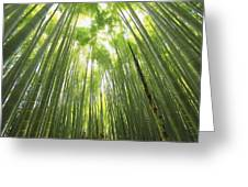 Bamboo Forest 5 Greeting Card