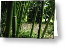 Bamboo Forest Greeting Card by Andres LaBrada