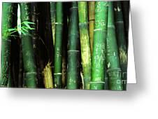 Bamboo Graffiti Pano - Sichuan Province Greeting Card by Anna Lisa Yoder
