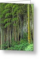 Bamboo Hill Greeting Card