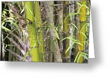 Bamboo I Poster Look Greeting Card