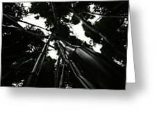 Bamboo Skies 3 Greeting Card