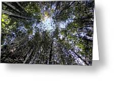 Bamboo Sky Greeting Card
