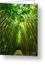 Bamboo Sky - The Magical And Mysterious Bamboo Forest Of Maui. Greeting Card