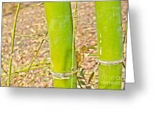 Bamboo Stems Greeting Card