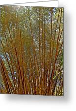 Bamboo Trees In Manuel Antonio National Preserve-costa Rica Greeting Card