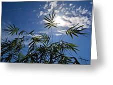 Bamboo Under The Sun Greeting Card