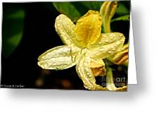 Banana Azalea  Greeting Card