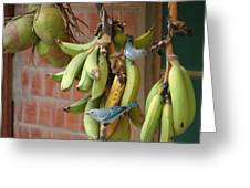 Banana Birds Greeting Card