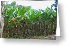 Banana Field Greeting Card