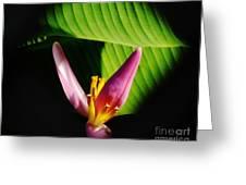 Banana Flower Greeting Card