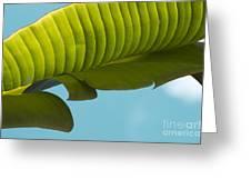 Banana Leaf And Maui Sky Greeting Card