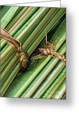 Banana Leaves Greeting Card