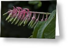 Banana Orchid Show Greeting Card