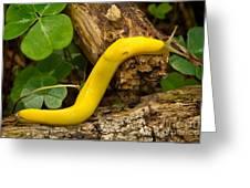 Banana Slug Greeting Card