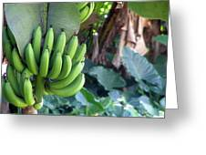 Banana Tree Greeting Card