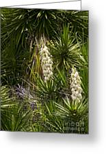 Banana Yucca   #0533 Greeting Card
