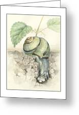 Banded Garden Snail  Greeting Card