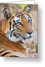 Bandhavgarh Tigeress Greeting Card