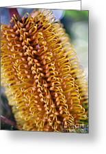 Banksia Flower Greeting Card